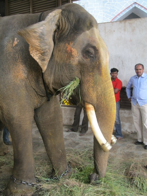 Ram Prasad eating greens