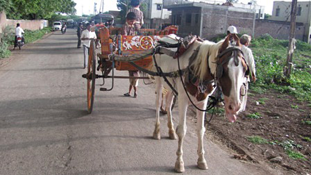 tonga pony with leased cart while other is repaired