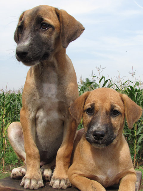 two other rescued puppies joined their siblings at RBH
