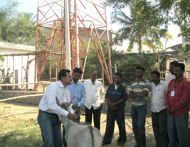 Training municipal workers on animal handling.