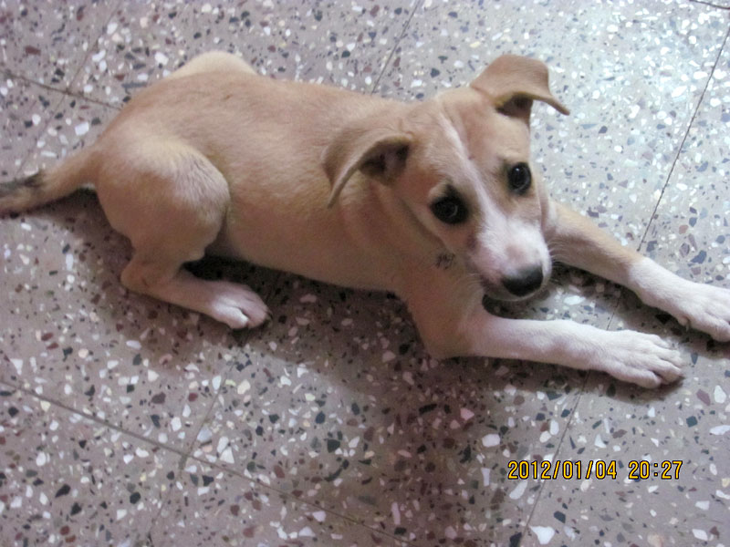 Puppy with injured leg rescued