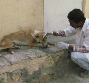 helping street dogs