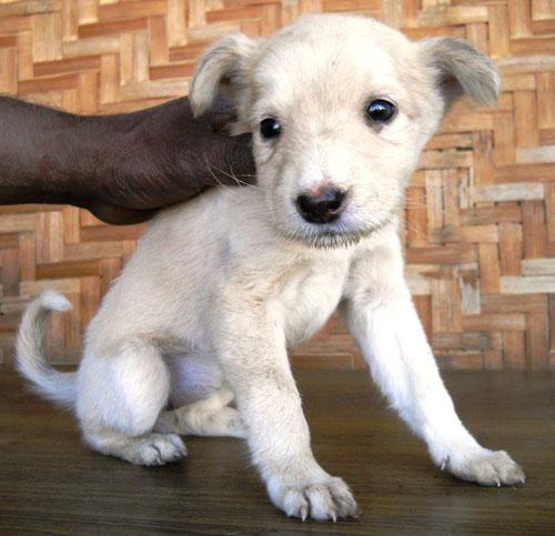 puppy-Junie-jpg