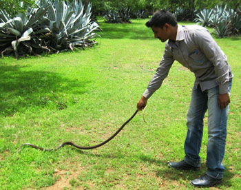 releasing-rat-snake