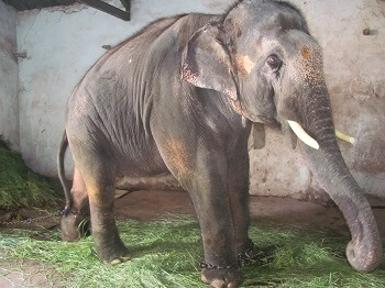 2012-05.Sunder chained