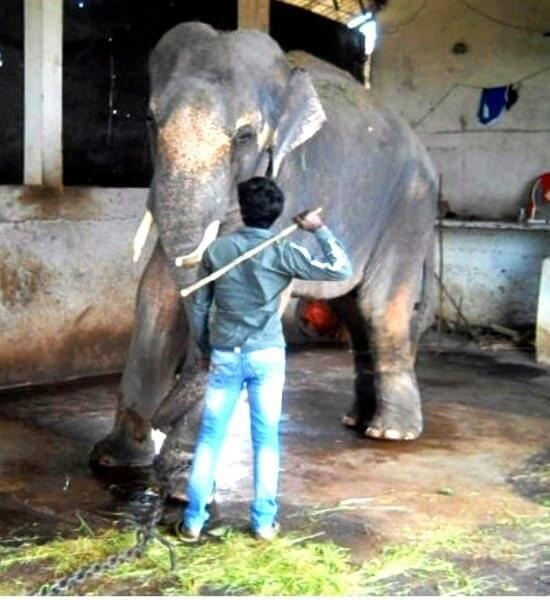 2013-11.Sunder being beaten