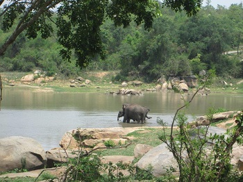 Other elephants at the park who will soon be Sunder's friends.