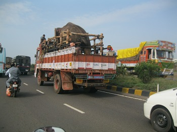 Sunder-en-route-to-new-home-pic-2