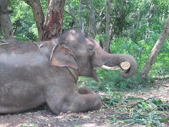 Sunder is already making himself at home at his new home.
