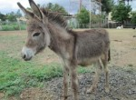 rescued donkey foal at HRB
