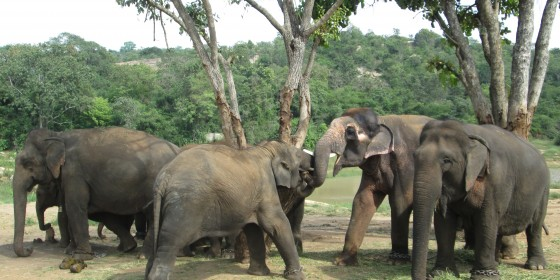 24-Sunder-with-entire-elephatn-family-at-BBP