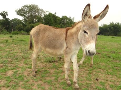 Playful, Smart, and Social: The Hidden Life of Donkeys - Animal Rahat