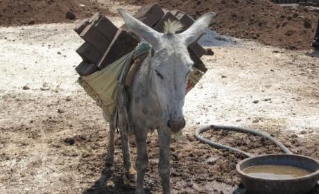 2015-04.donkey loaded with bricks 2