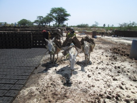 2015-04.donkeys at brick kiln 3
