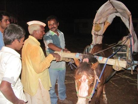 peta_india_animal_rahat_chinchali_fair_2013_014