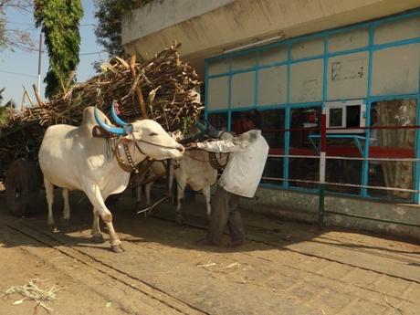 peta_india_animal_rahat_dr_manilal_valliyate_presentation_peta_owns_002