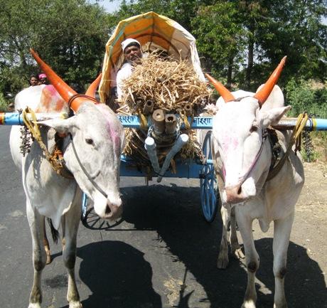 peta_india_animal_rahat_dr_manilal_valliyate_presentation_peta_owns_008