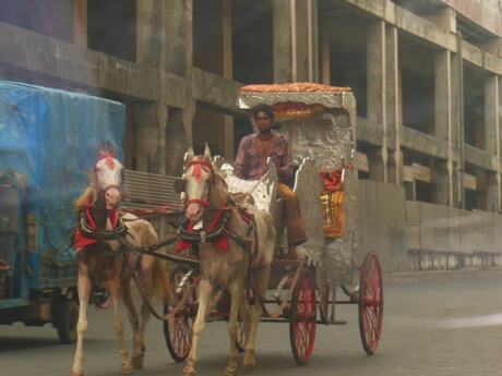 peta_india_horse_drawn_carriages_general_abuse_002