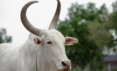 Roushya (2)