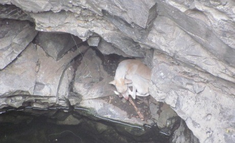 2015-07.dog rescued from well (3)