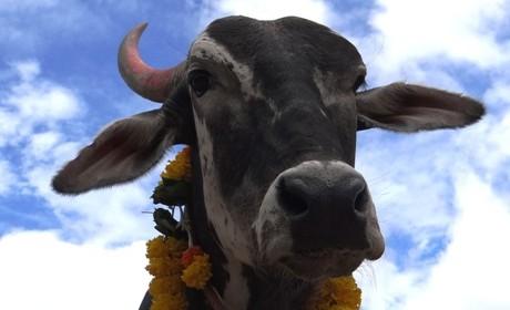 peta_india_animal_rahat_dr_manilal_valliyate_presentation_peta_owns_001