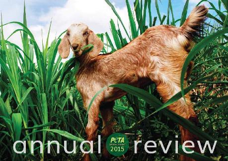 ANNUAL REVIEW 2015_ANIMALRAHAT_FIN72_WEB
