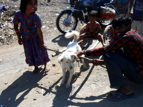 2016-02.dog pulling child in cart