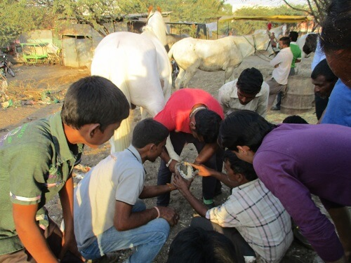 2016-02.farriery training at tonga stands (3)