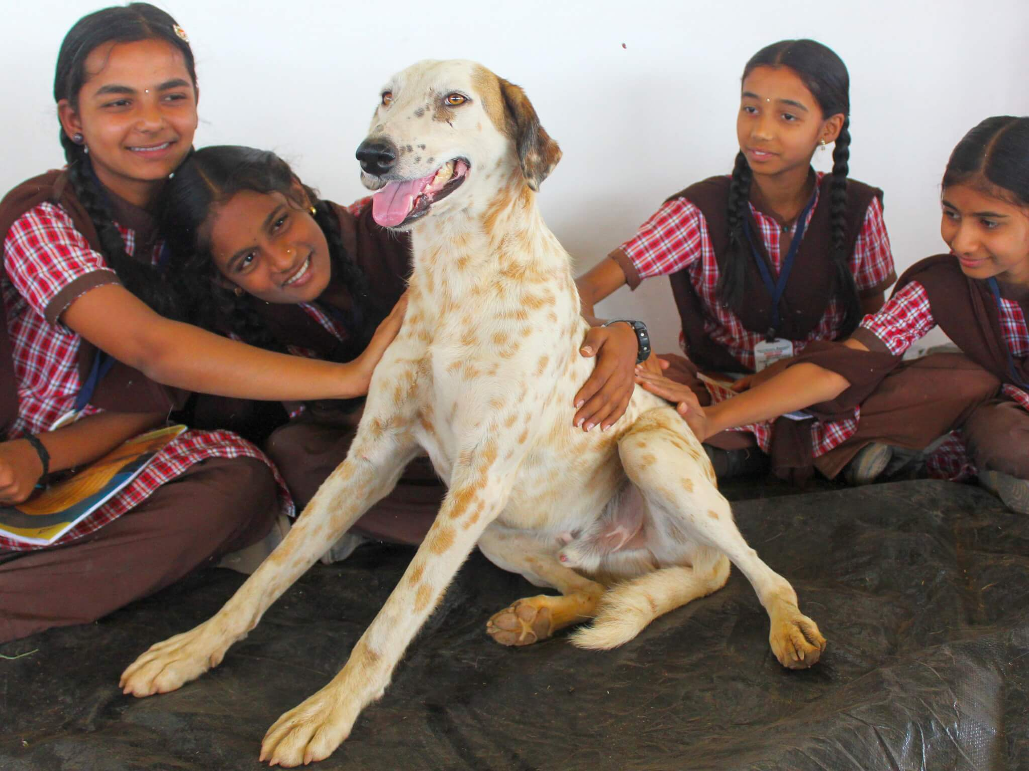 Tommy the dog loves the attention heaped on him by a group of schoolchildren.