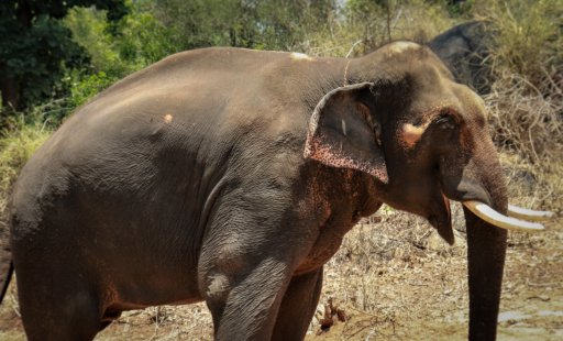 To Sunder: Here's to Five Years of Freedom!
