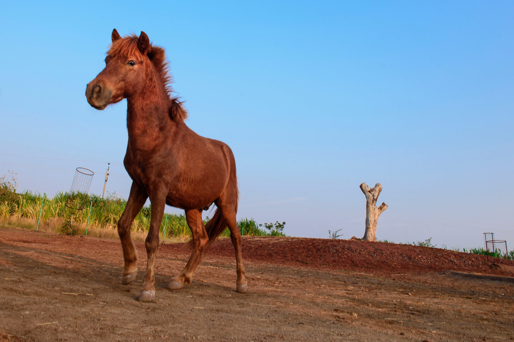 Prasanth, a brown pony, stands in an open area at the sanctuary.