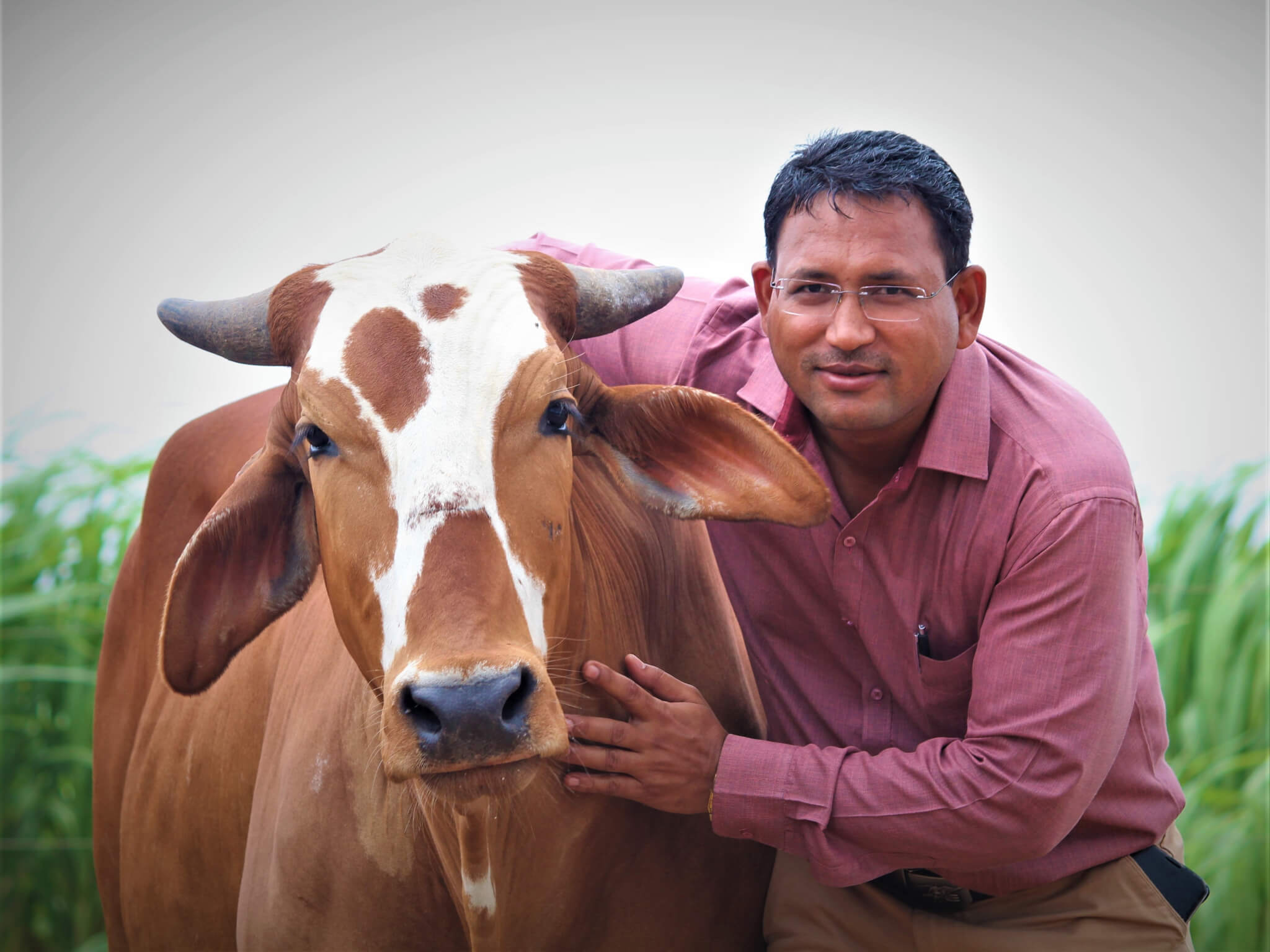 Dr. Naresh Upreti stands with his arm around rescued bullock Caro, a sanctuary resident.