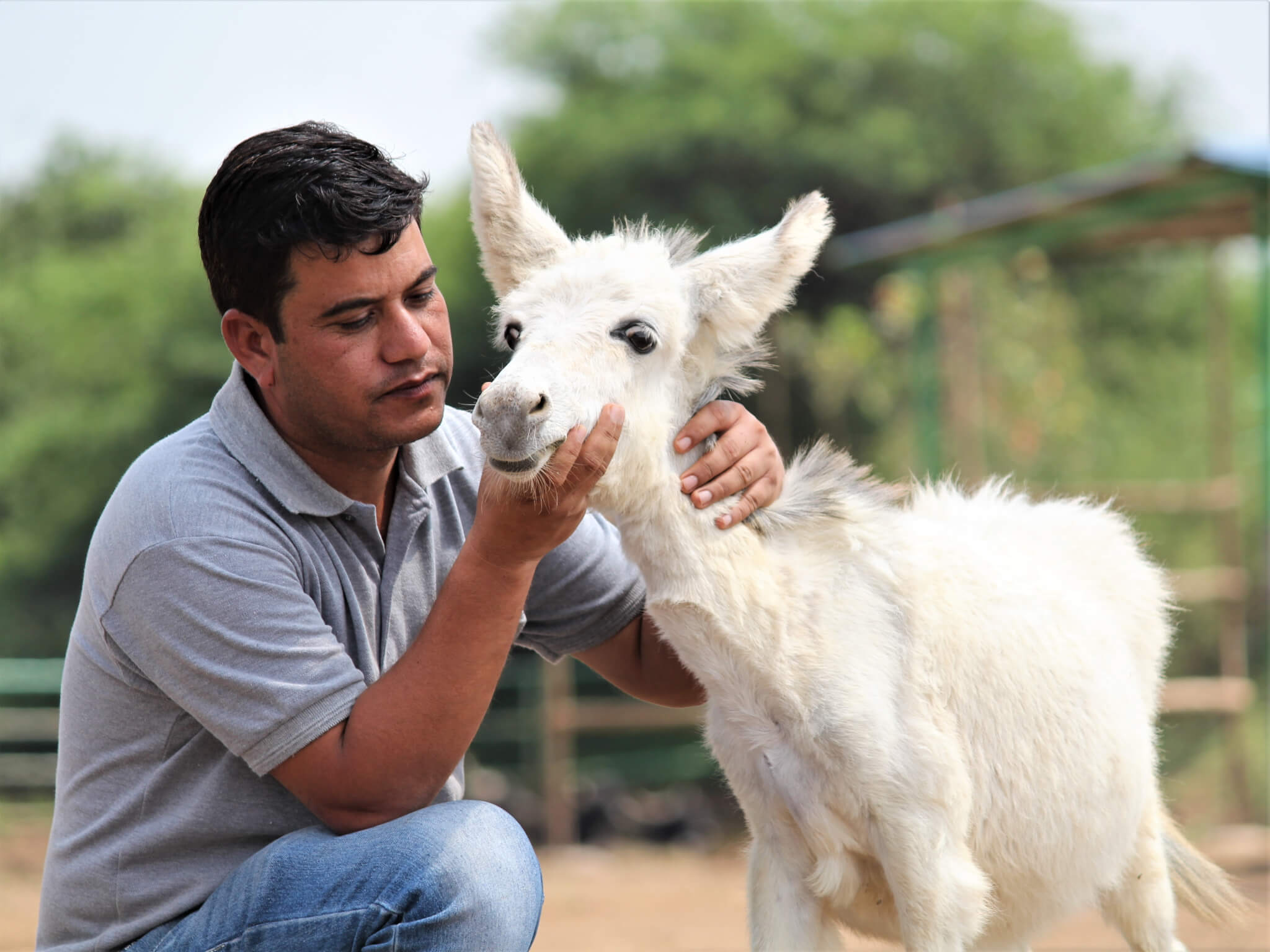 Dr. Rakesh Chittora shows affection to a donkey foal.