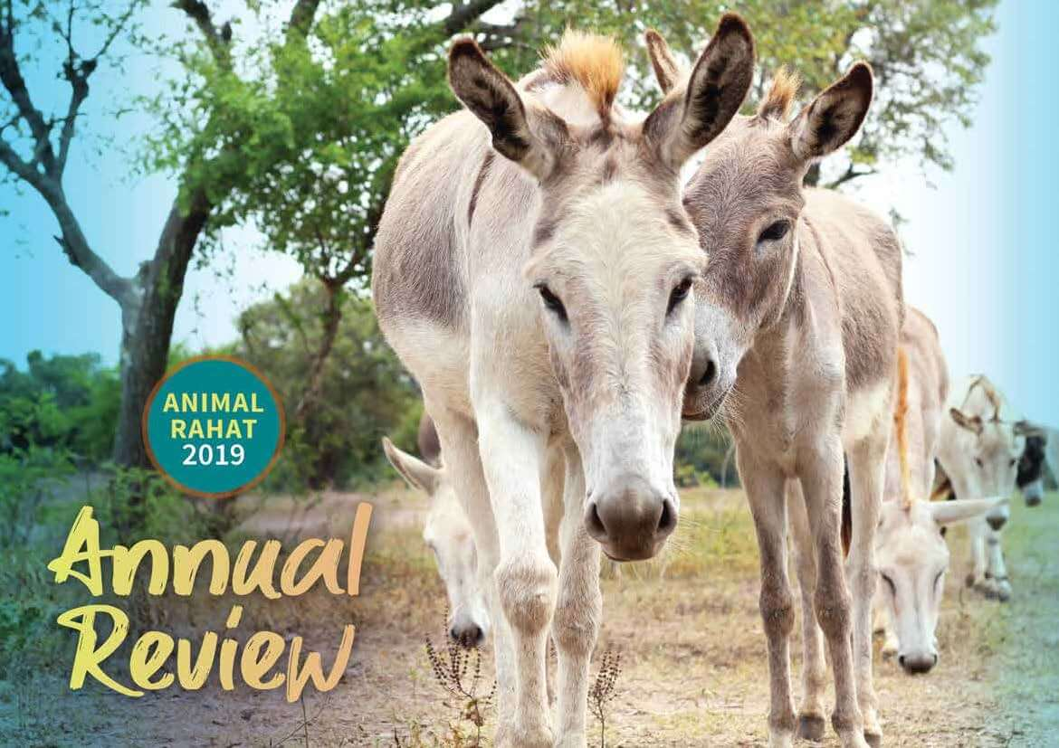 The cover of Animal Rahat's 2019 Annual Review shows two donkeys nuzzling each other at a beautiful hillside sanctuary.