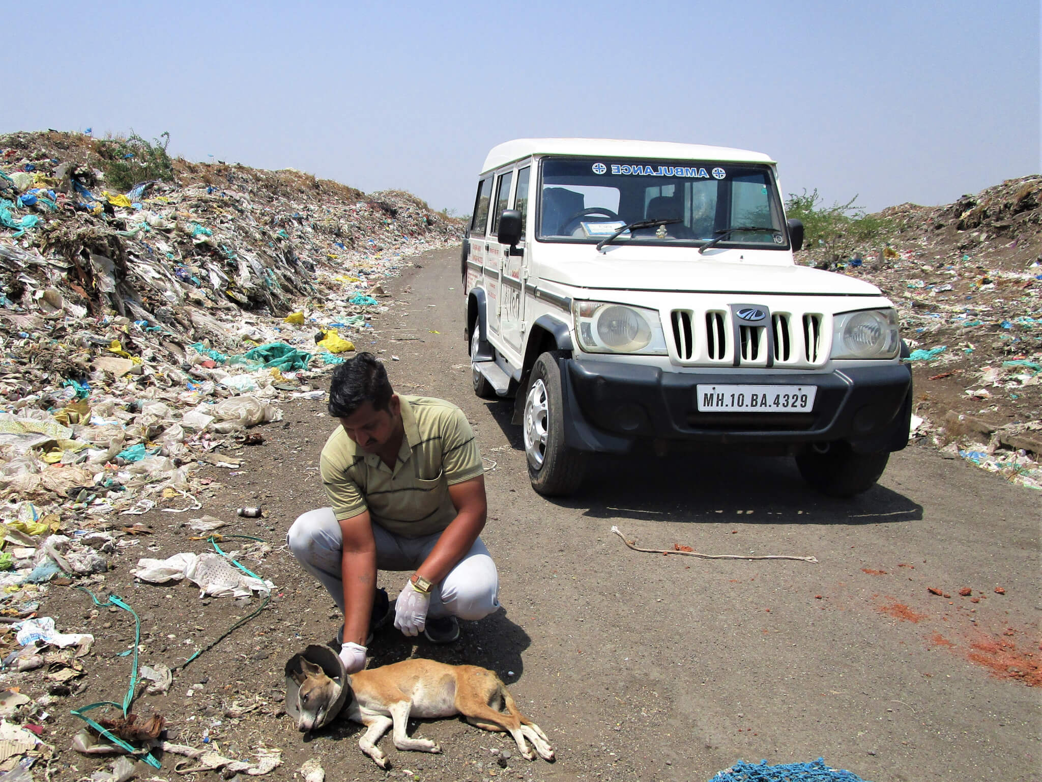 An Animal Rahat staff member attends to a dog with a broken clay jar stuck around their neck.
