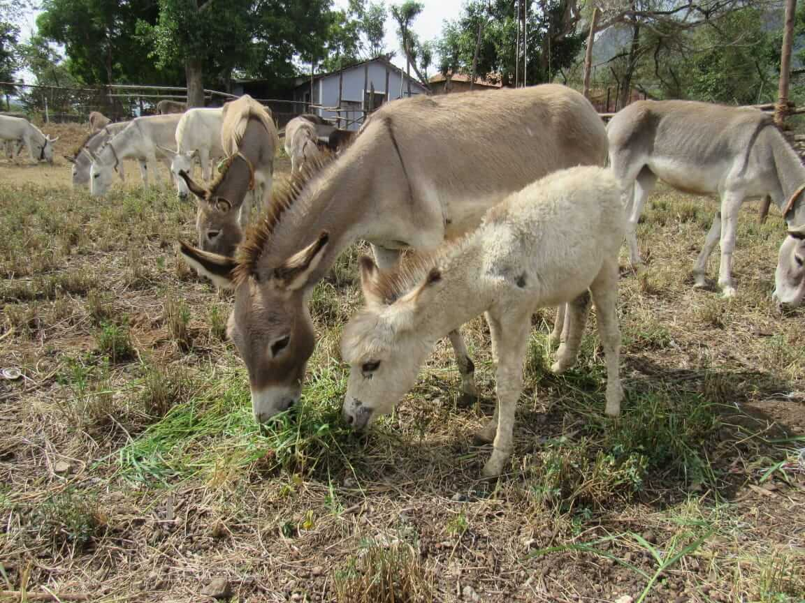 A donkey and her foal stand together at the sanctuary.