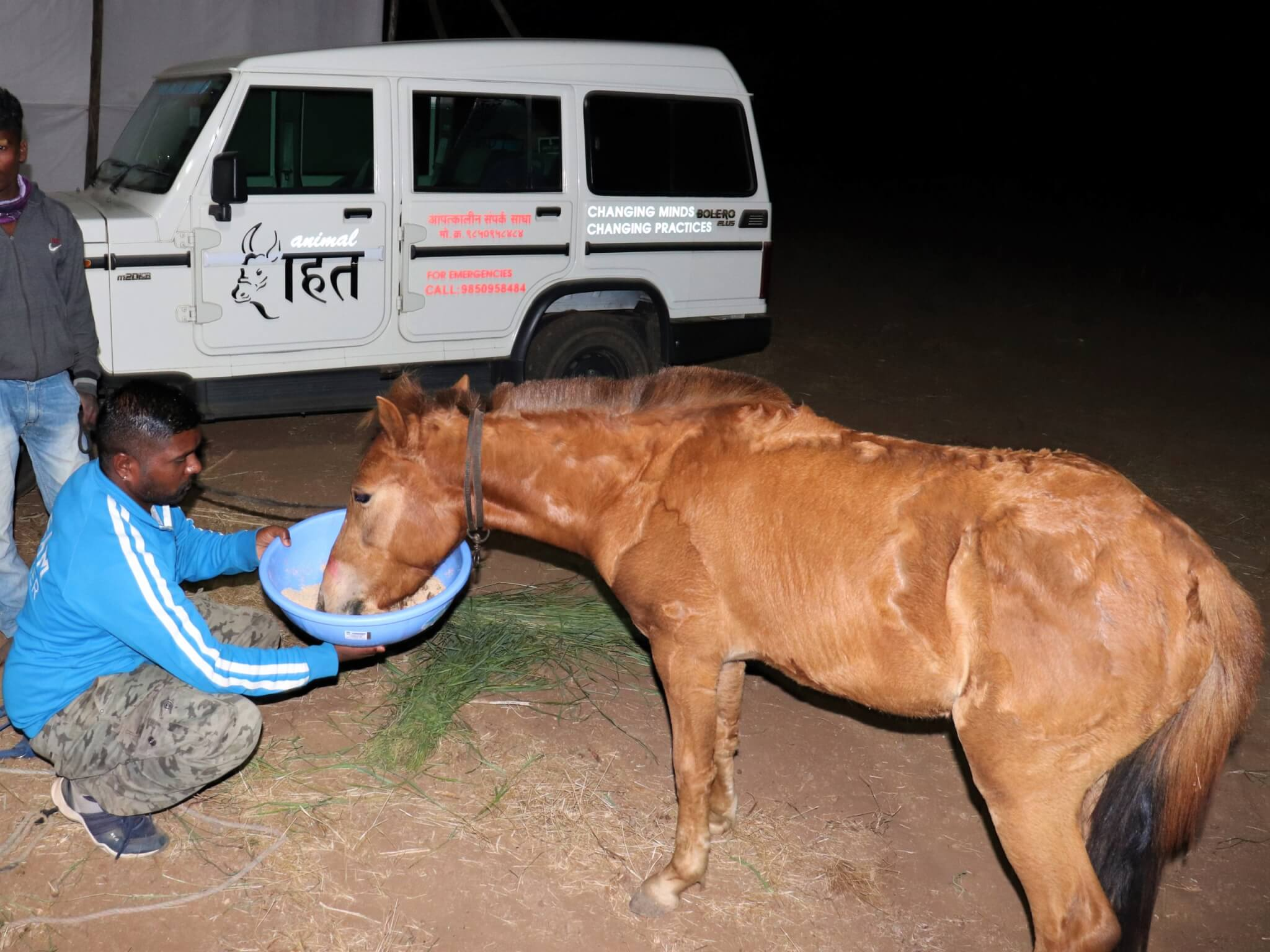 A pony eats from a bowl held by an Animal Rahat team member.
