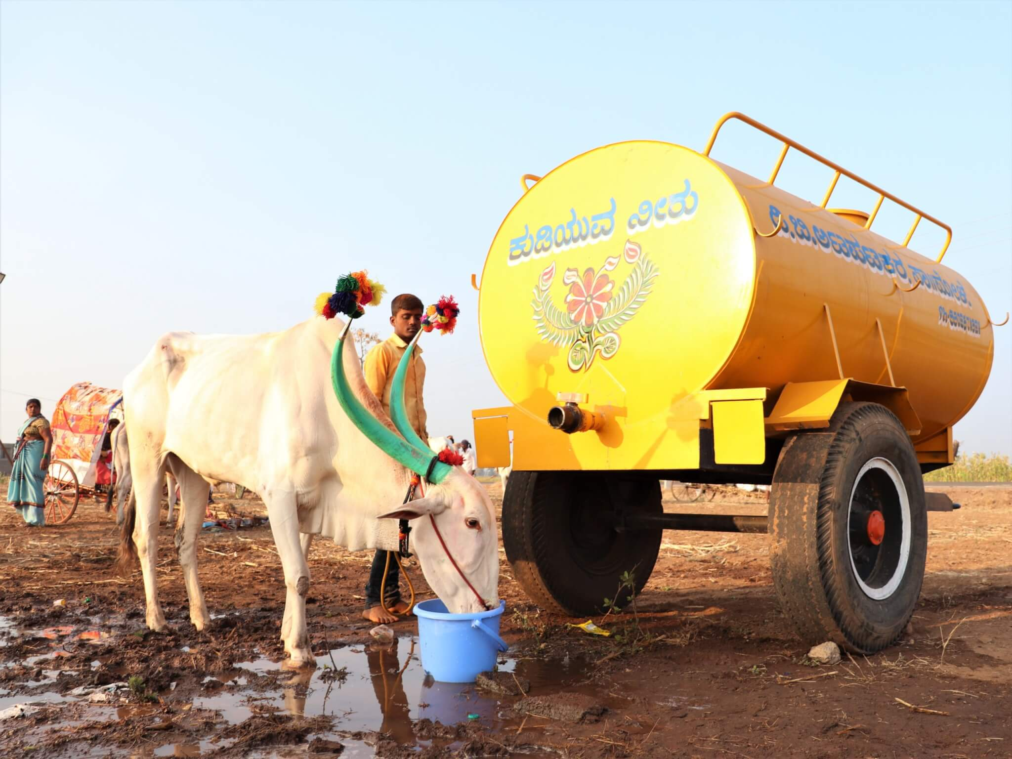 A bullock drinks fresh water from a bucket in front of a yellow water tank.