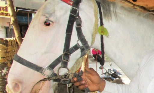 Great News for Horses: Crackdown on Spiked Bits in Maharashtra!