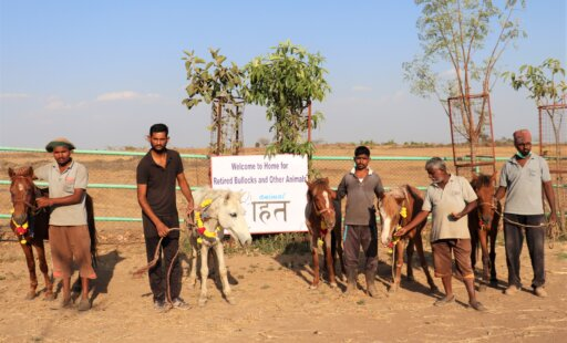 Five Former Working Ponies Find Sanctuary