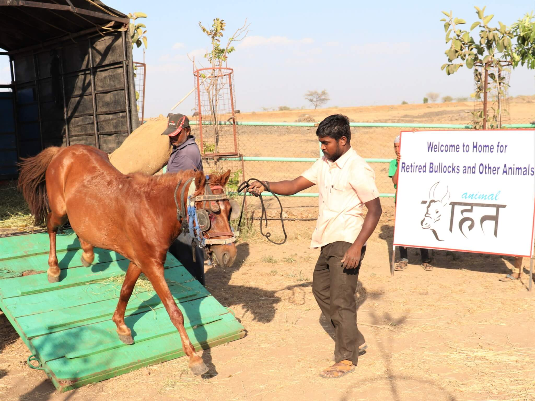 The team leads rescued pony Sallu off the transport truck.