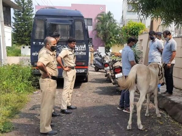 Local police and Animal Rahat staff gather around the abused pony.