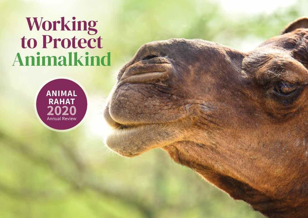 Animal Rahat's 2020 Annual Review