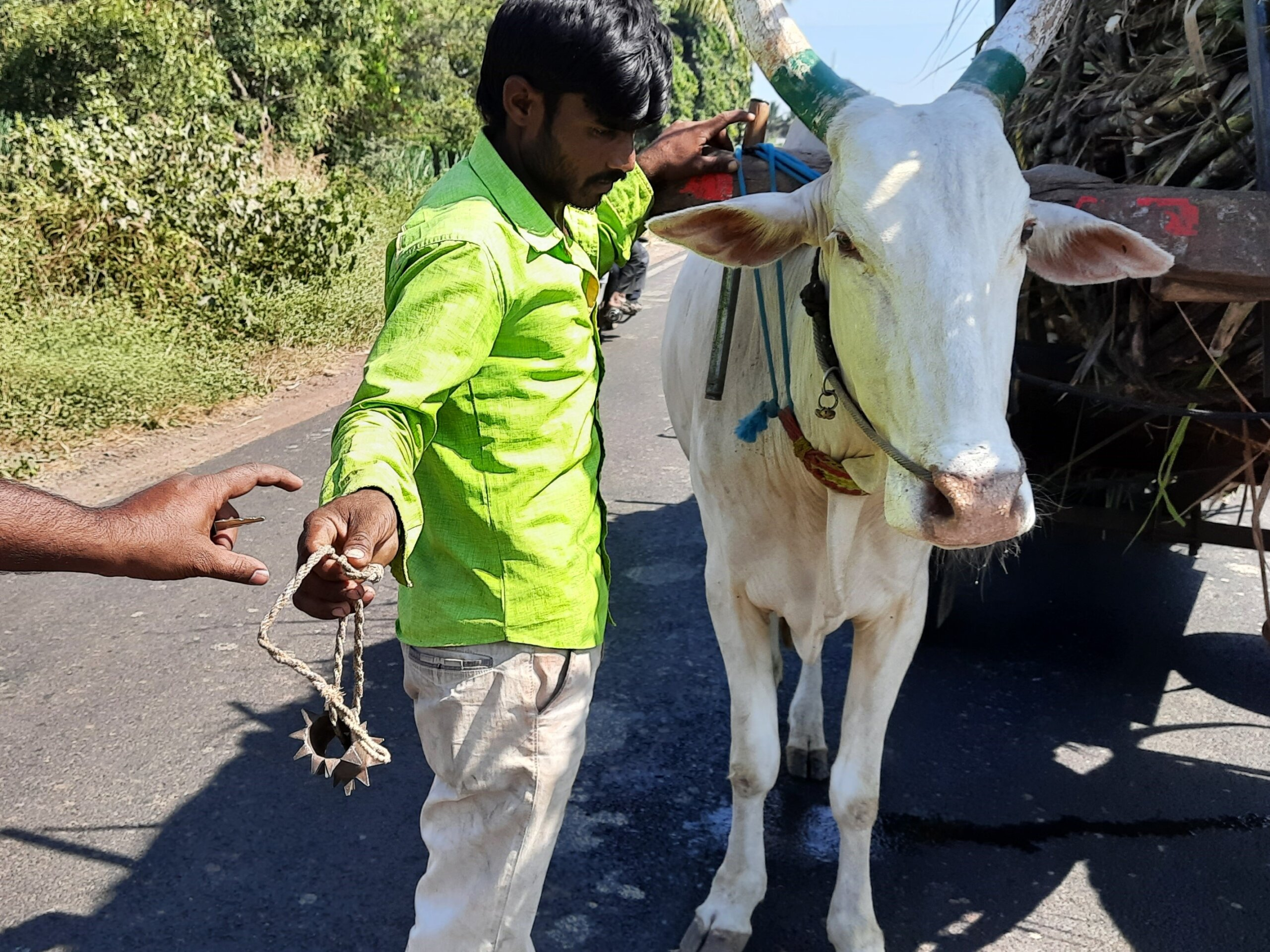 Animal Rahat stopped this man on the way to a sugar factory and persuaded him to remove his yoke spikes.