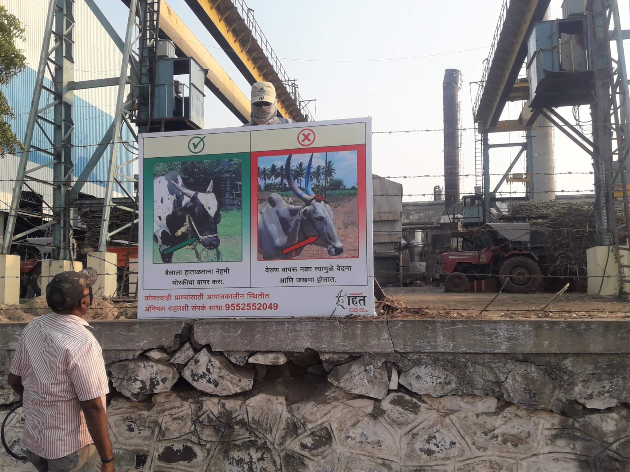 Animal Rahat's signs are displayed at sugar factories, informing bullock owners about the use of illegal devices and proper care.