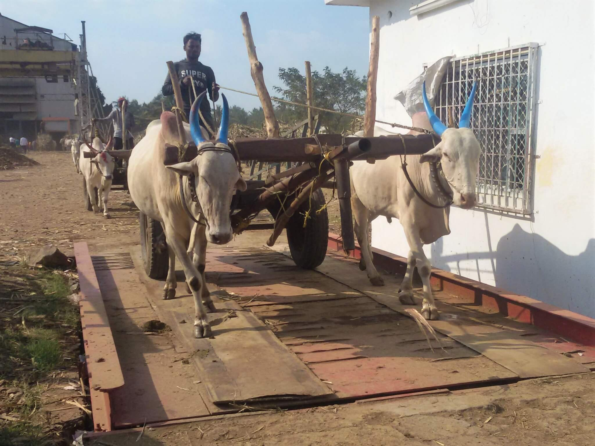 Animal Rahat covered this metal weighing platform with rubber mats to prevent slips and injuries.