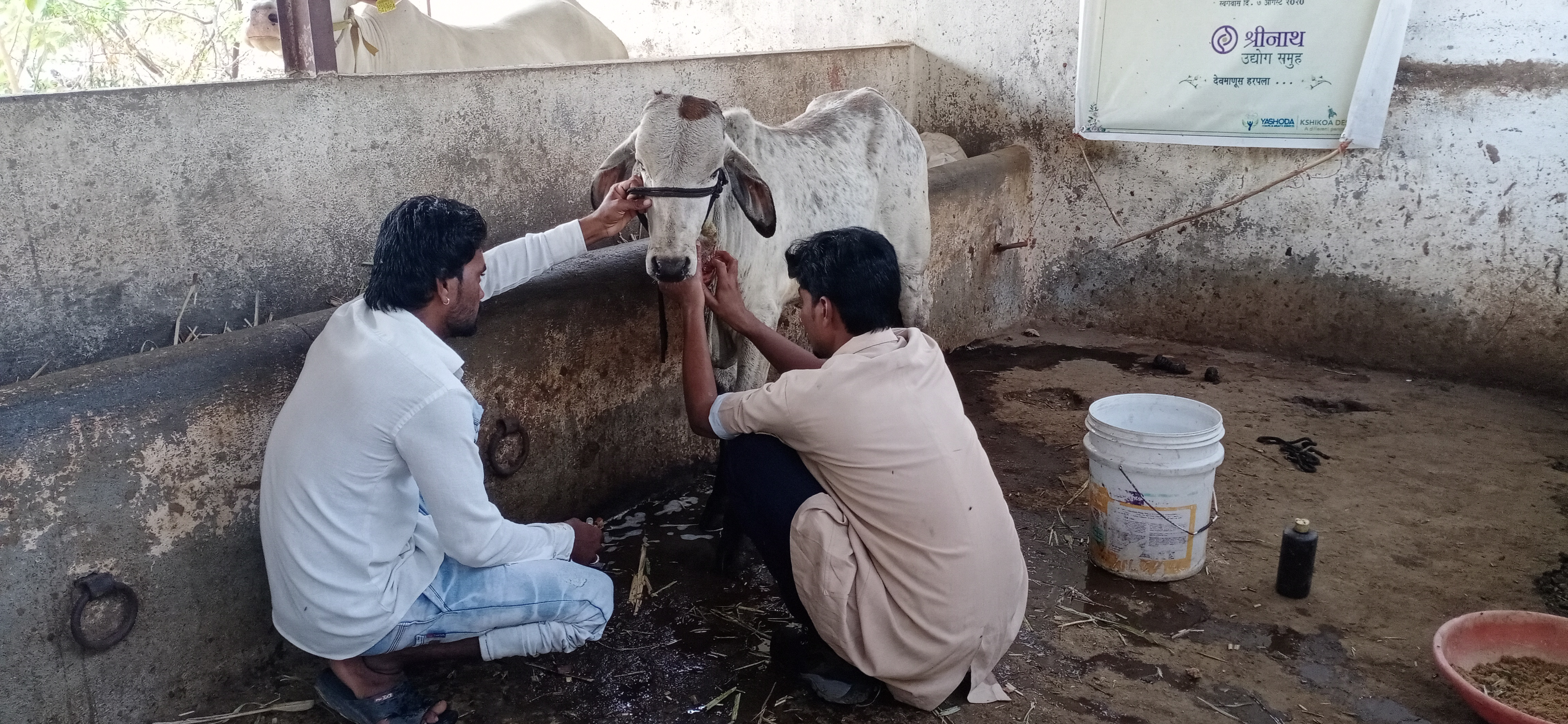 Vitthal is treated by Animal Rahat's experts.