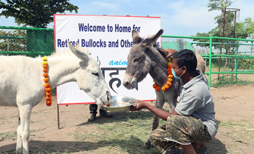 36 Donkeys Rescued From Illegal Mining Operation