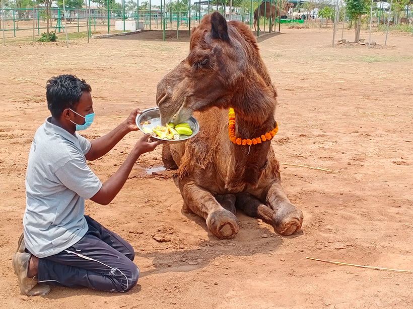 Afzal celebrates a holiday at one of Animal Rahat's sanctuaries.
