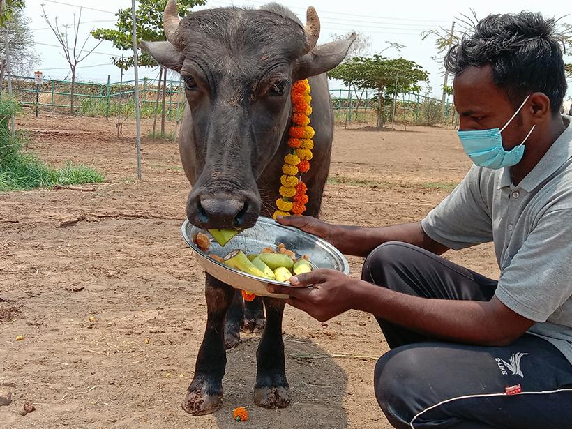 Bablu celebrates a holiday at one of Animal Rahat's sanctuaries.